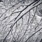 Neuschnee | New Snow