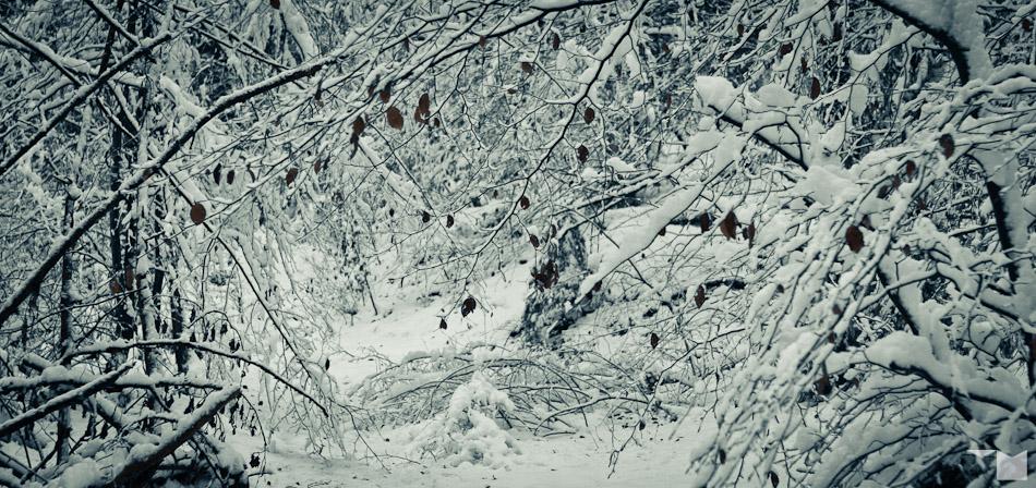 Verschneit | Snowy