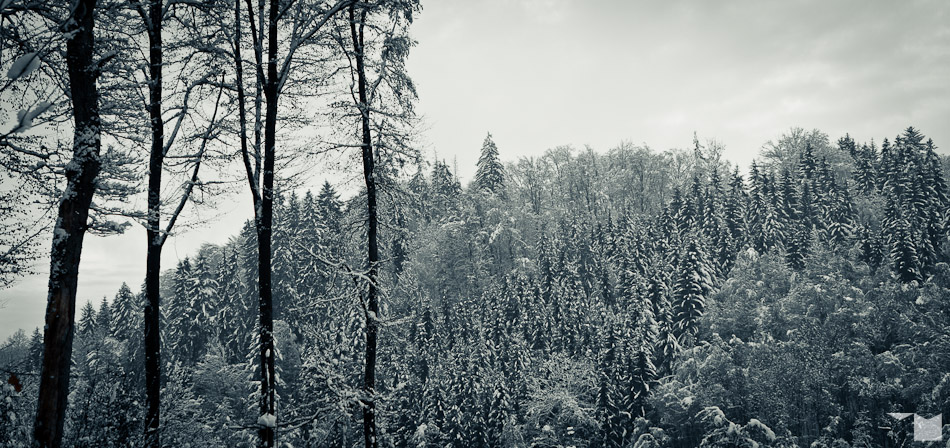 Winterwald | Winter Forest