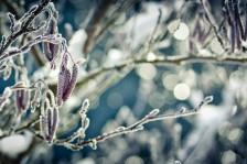 Das Geheimnis des Winters | Winter's secret