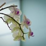Die Orchidee im Wohnzimmer
