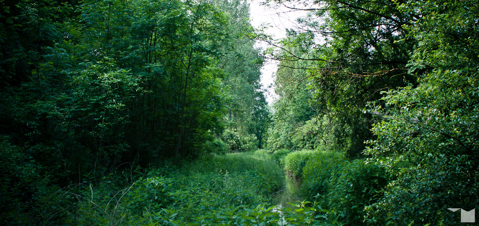 Auwald | Riparian Forest