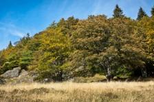 Trockenzeit | Dry season