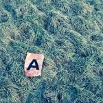 Und dann lag da dieses «A» auf der Wiese…